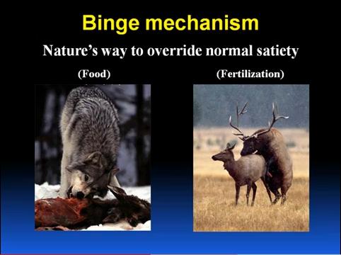 binge mechanism