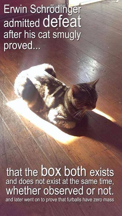Schrodinger's cat